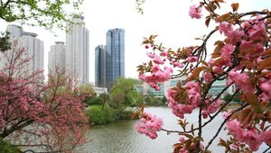 Auslandssemester in Seoul - IEC